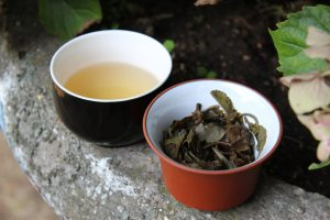 Moonlight white mei leaf tea adventures