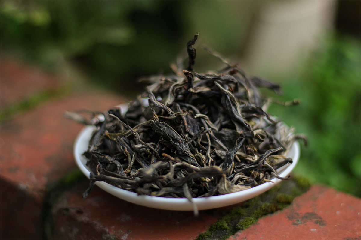 Young Puerh Tea Adventures